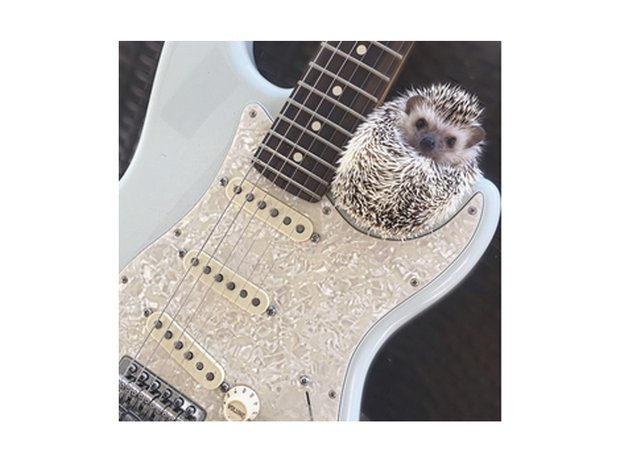 lionel the hedgehog
