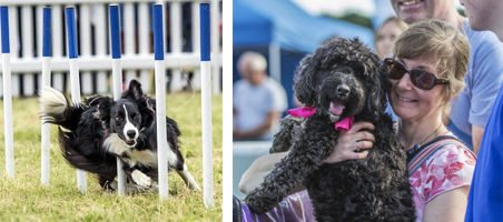 dogfest images