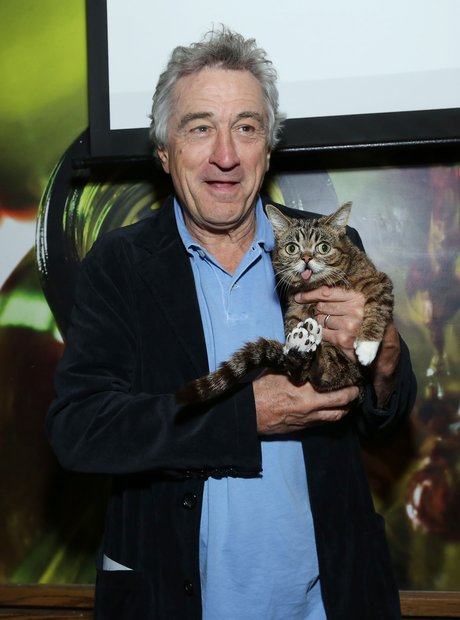 Robert De Niro and cat Lil Bub