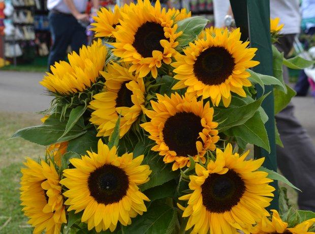 Southport Flower Show Celebrations