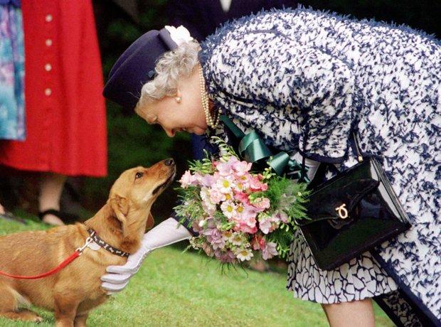 Queen's Life In Pictures