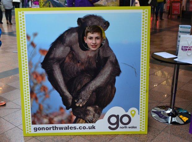 Go North Wales