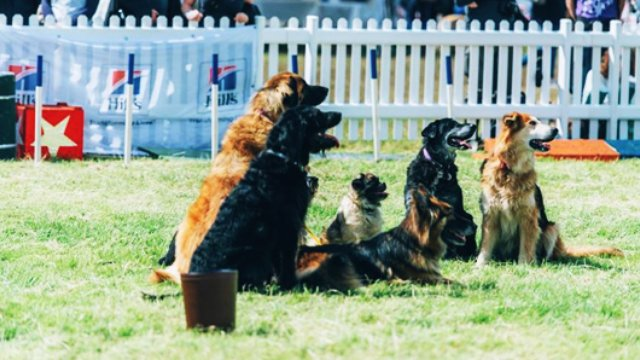 Can You Take A Dog To Hay Festival