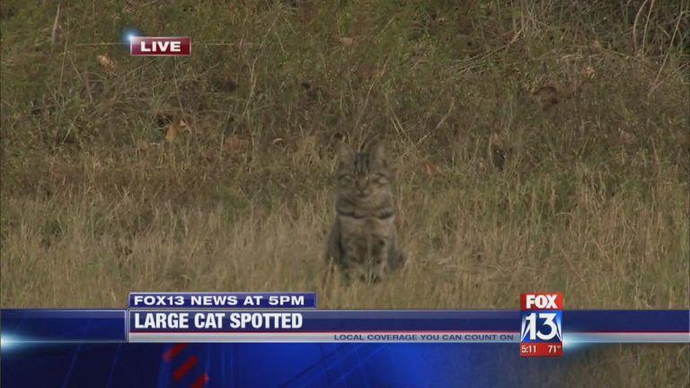 Cat report