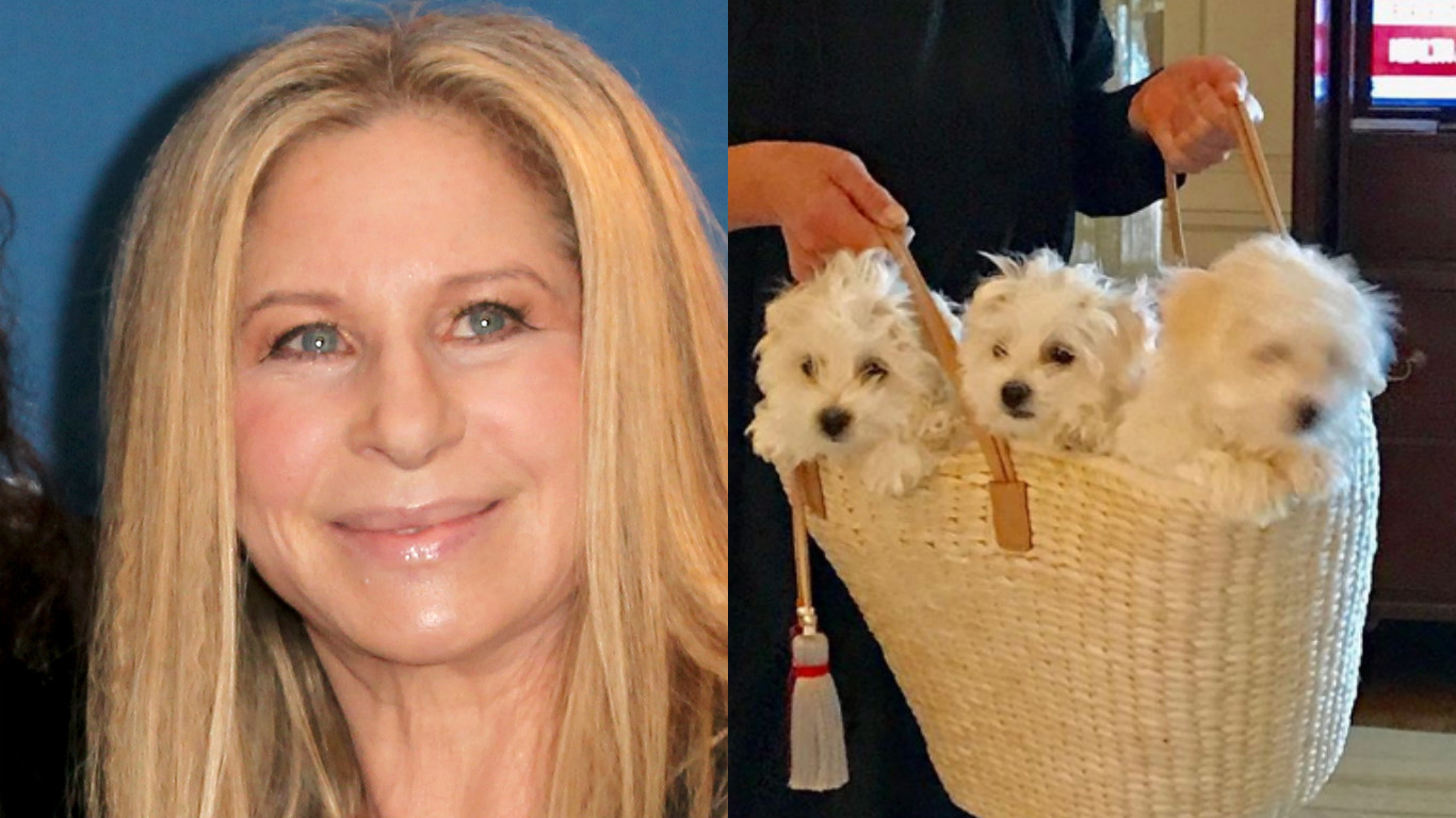 Barbra Streisand and her dogs