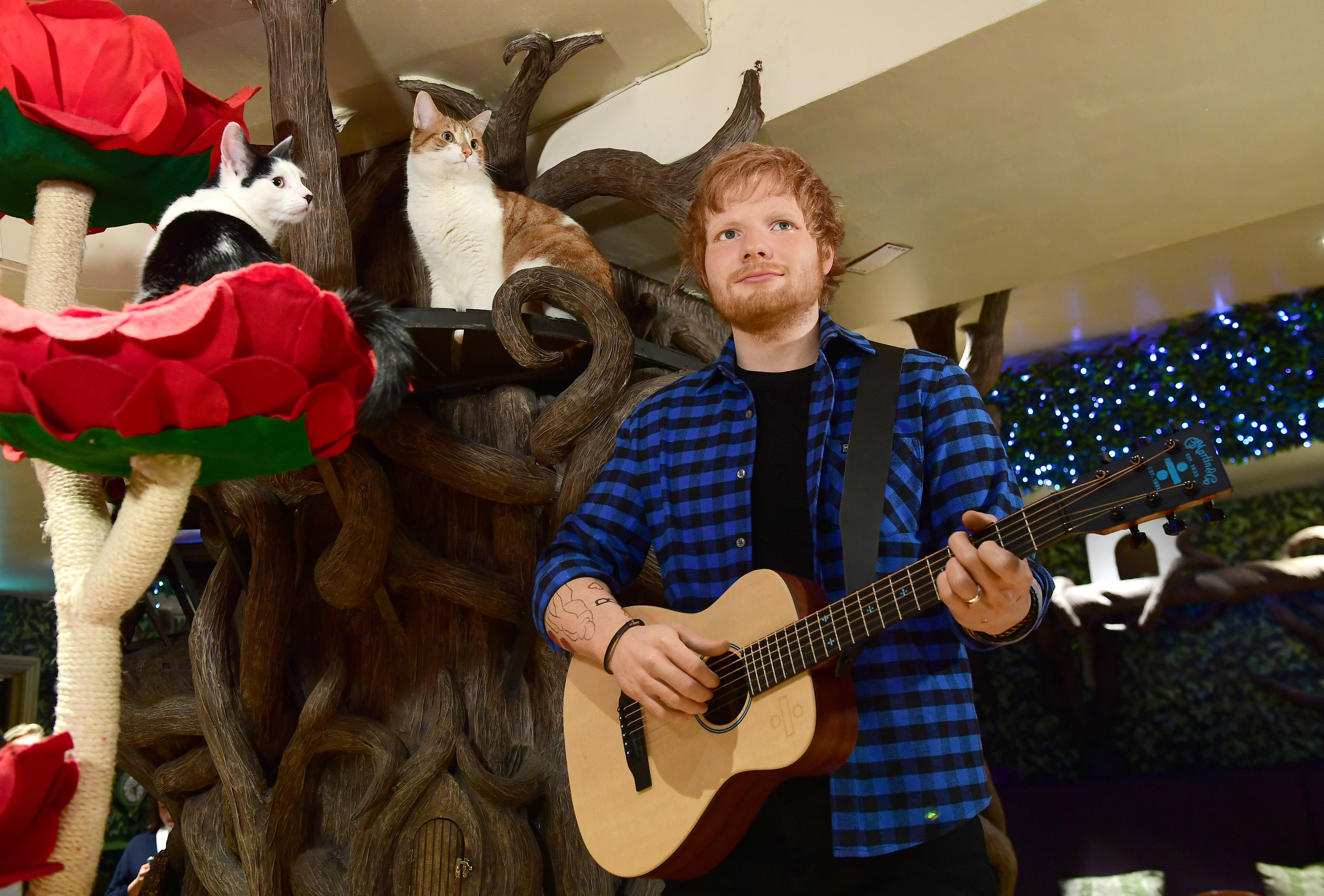 Ed Sheeran Madame Tussauds waxwork at Dinah's Cat